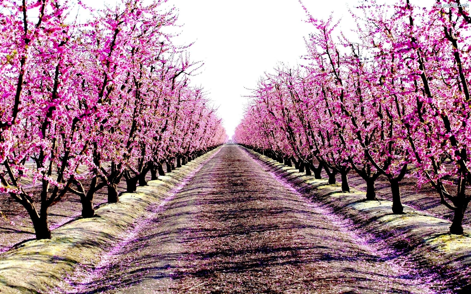 Drzewa, Wiosna, Sad Na Pulpit